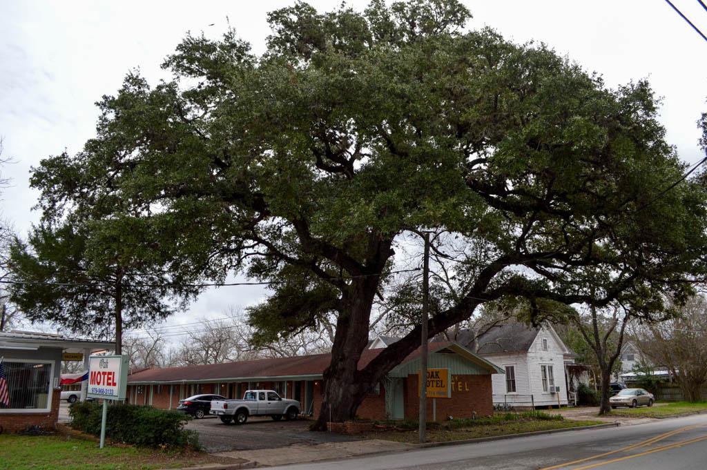 Oak Motel Good Eats Local Mike Puckett GW (3 of 19)